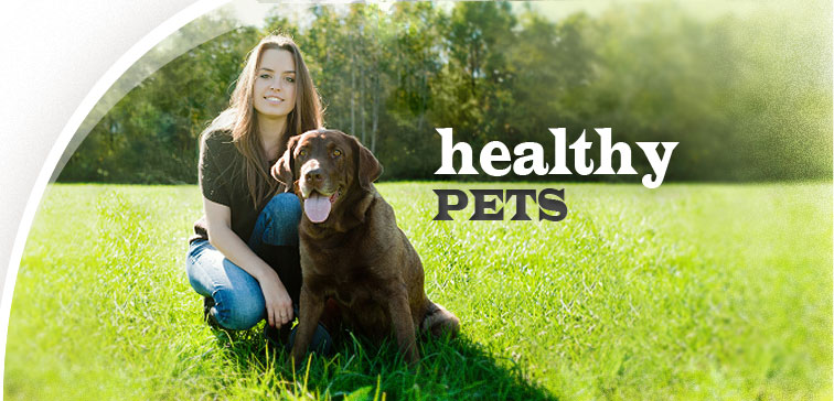 veterinarians in wright city mo